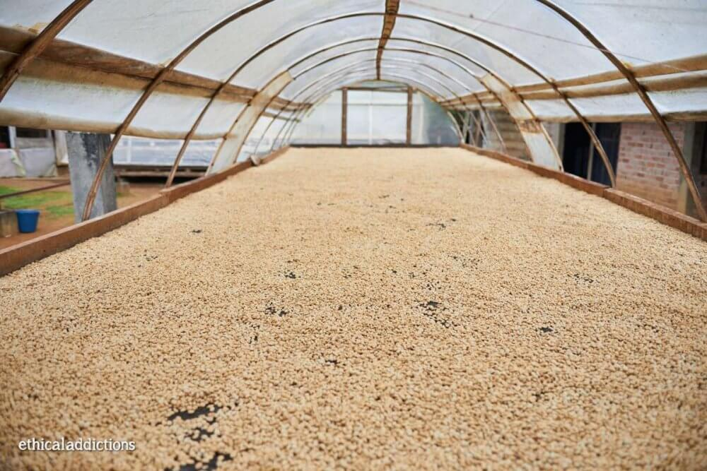 Colombian coffee companies drying table