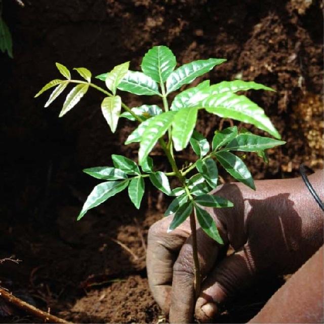 Tree Planting Project Mweka Villages